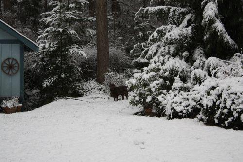 Snowyard